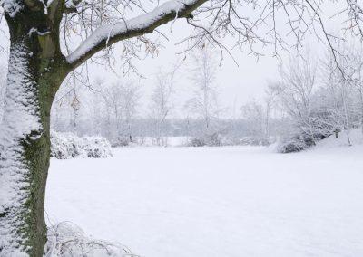 Boom in winterlandschap - Tree in Winter Landscape