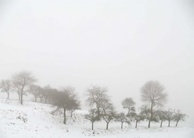 Boomgaard in winter - Orchard in Winter