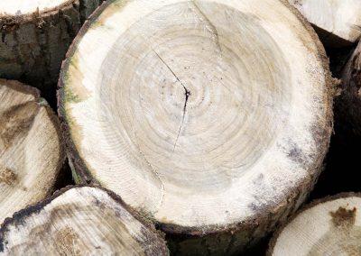 Gestapelde Boomstammen - Tree Logs