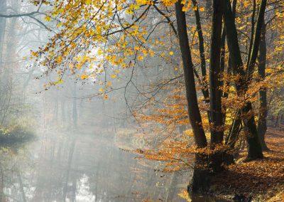 Herfstbos met beek - Autumn Forest with Brook 1