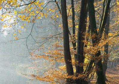 Herfstbos met beek - Autumn Forest with Brook 2