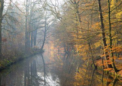 Herfstbos met beek - Autumn Forest with Brook 3
