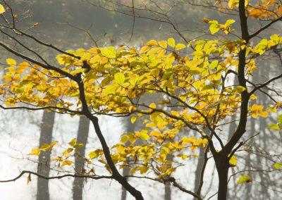 Herfstkleuren - Autumn Colors 1