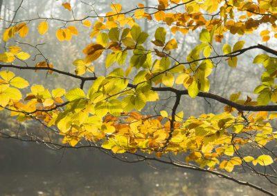 Herfstkleuren - Autumn Colors 2