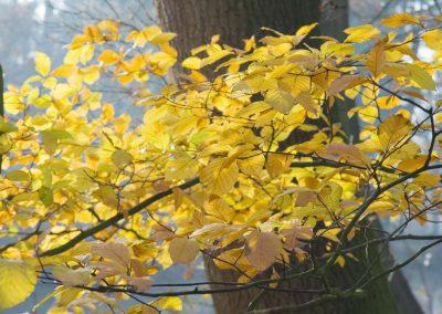 Herfstkleuren - Autumn Colors 3