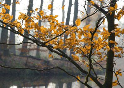 Herfstkleuren - Autumn Colors 4