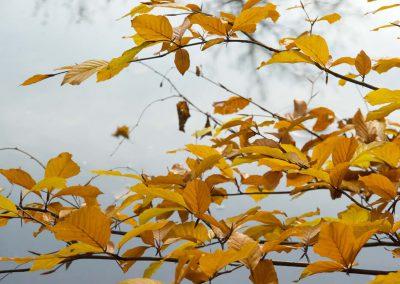 Herfstkleuren - Autumn Colors 5