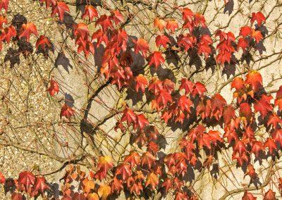 Herfstkleuren - Autumn Colors 6