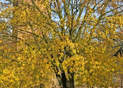 Herfstkleuren - Autumn Colors 7 (Maple)