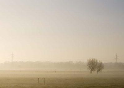 Knotwilgen in ochtendmist - Two Pollard Willows in morning Mist
