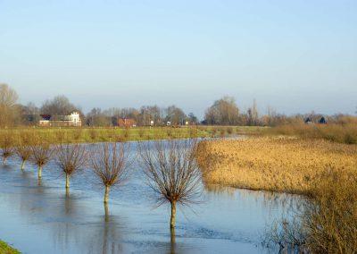 Knotwilgen in water - Pollard Willows in Water (River IJssel)
