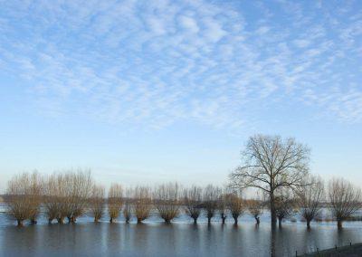 Knotwilgen langs de IJssel - Pollard Trees along River IJssel
