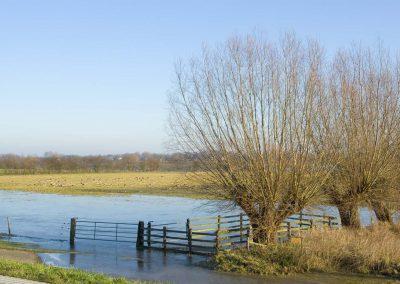 Knotwilgen langsd de IJssel - Pollard Willows along River IJssel