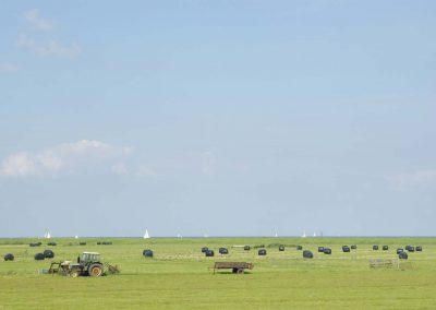 Pas gemaaid hooi bij randmeer (Agriculture)