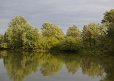 Reflecterende Wilgen - Reflecting Willows