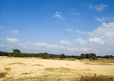 Sand Dunes (Wekeromse Zand)