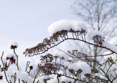 Stilleven met sneeuw - Natural background with Snow