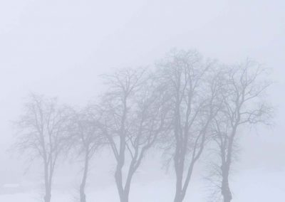 Winter Landscape with Trees 2