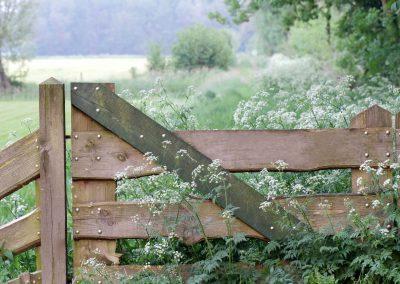 Hek met Fluitekruid - Anthriscus sylvestris (Cow parsley)